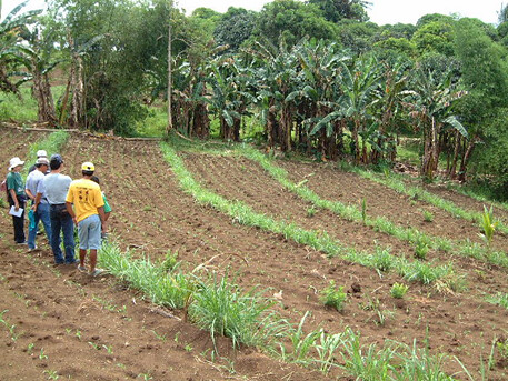 Planting napier to control soil erosion in the philippines for Soil erosion prevention