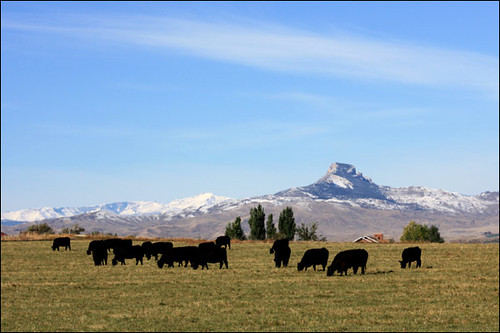 cattle ranch for sale, Cody Wyoming | cattle ranch for ...