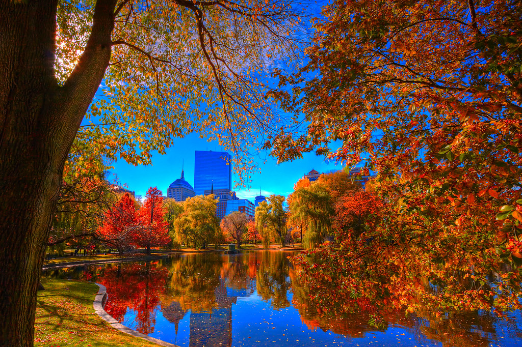 Boston public garden late autumn papadunes flickr Boston public garden map