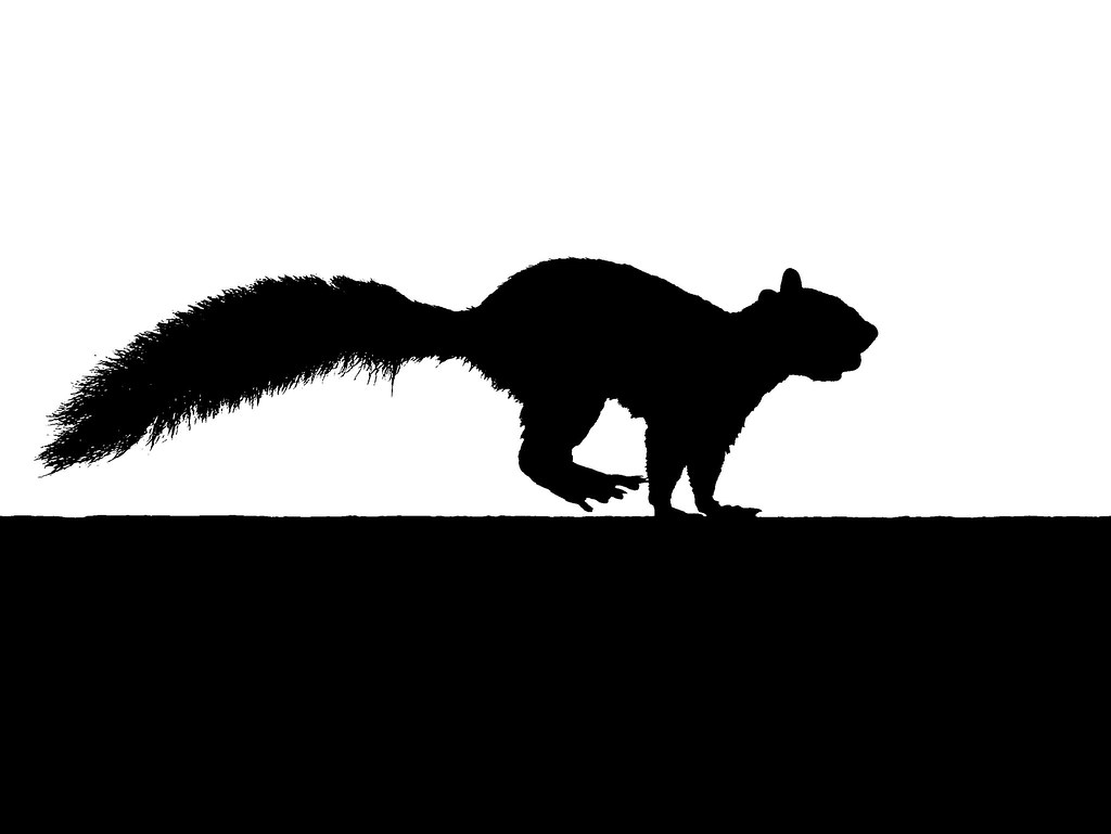 running squirrel silhouette with nut kintired flickr Squirrel Clip Art Black and White Squirrel Clip Art Black and White