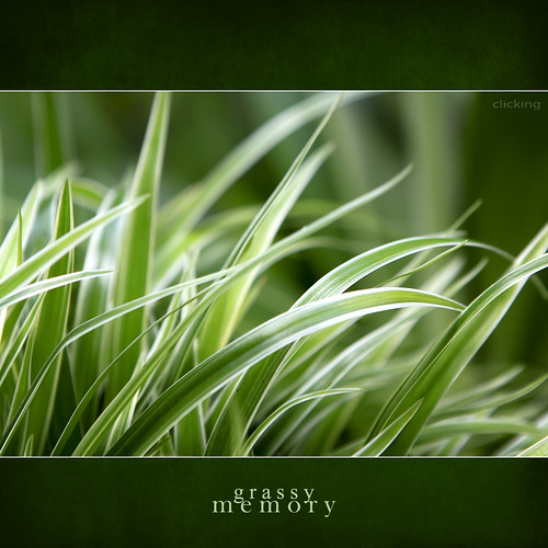 grassy memory - [ EXPLORED ] | by -clicking-