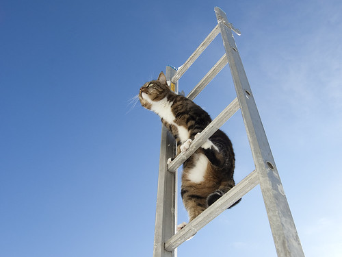 Ladder cat | by Kim Ledin