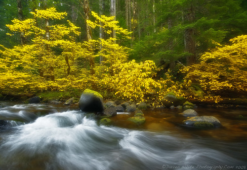 Softness Falls on Fall | by Darren White Photography