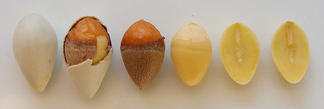Ginkgo noten