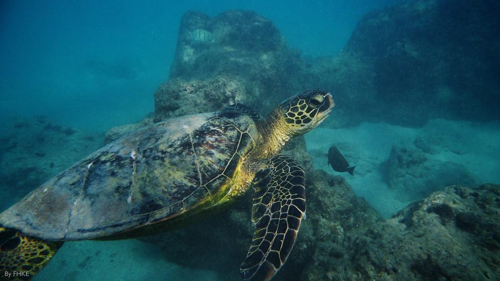 Sea Turtle in Mexico