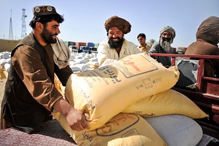 Farmers collecting wheat seed in Helmand | by DFID - UK Department for International Development