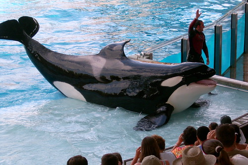 Shamu at Seaworld | by Abi Skipp