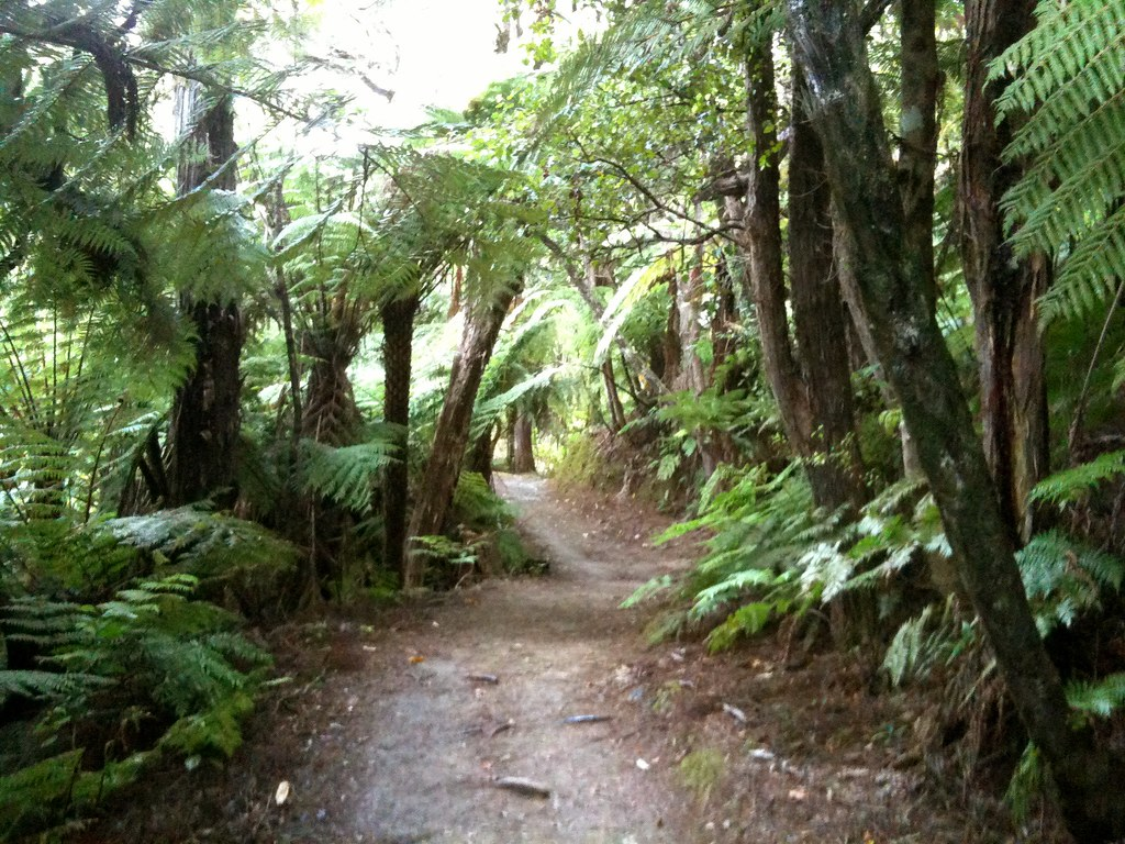 Mountain bike the queen charlotte track picton new zeala for Landscape jobs nz