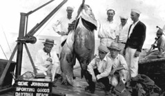 Grouper caught in the Halifax River displayed at Gene Johnson's Tackle Shop: Daytona Beach, Florida | by State Library and Archives of Florida