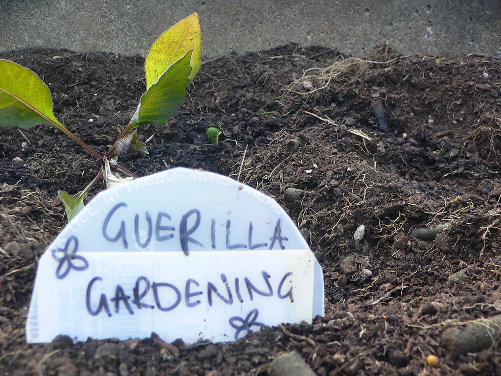 "Plant behind sign reading ""guerrilla gardening"""
