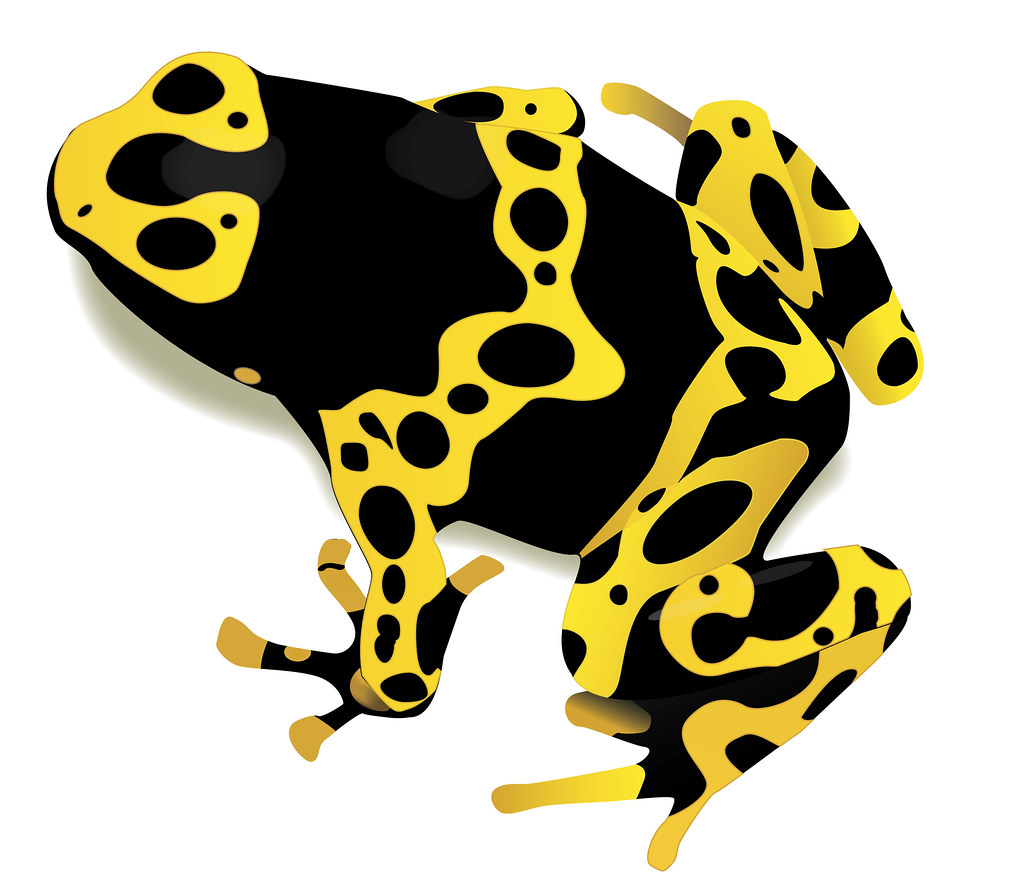 Image Result For Poison Dart Frog