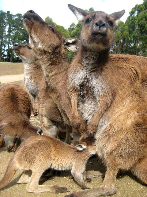 images ballarat wildlife - photo #20