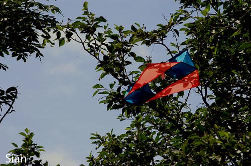 kite stuck in tree | Sian | Flickr