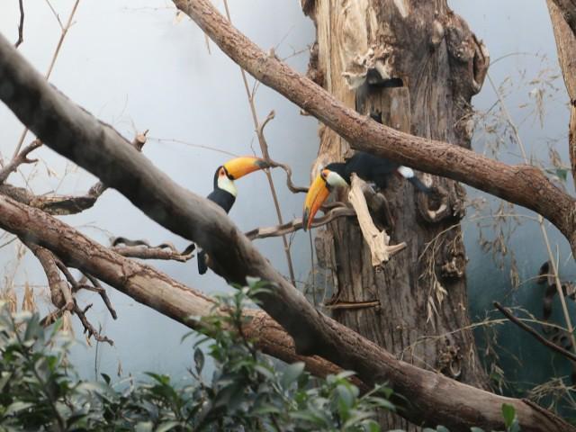 zoo copenhaga 9 obiective turistice copenhaga