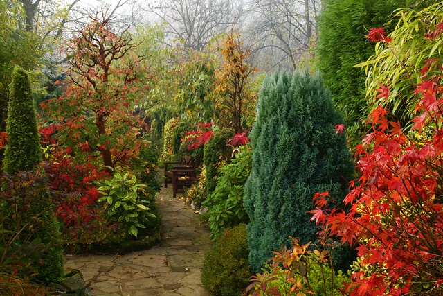 autumn garden another view on one of those recent misty. Black Bedroom Furniture Sets. Home Design Ideas