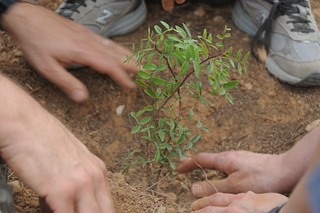 Planting trees at the JNF Forest | by Scott Ableman