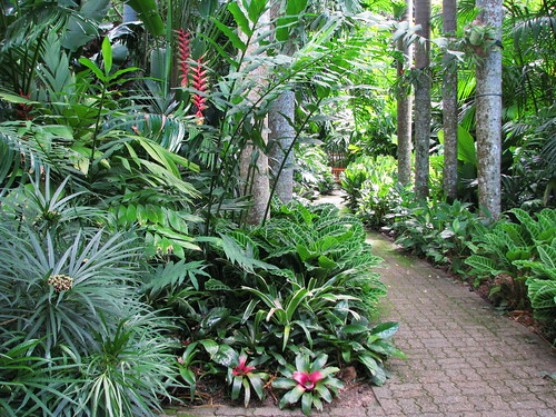 Tropical landscaping cairns botanic gardens tanetahi for Small garden trees queensland