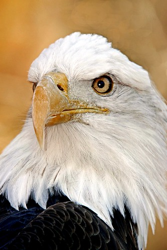 Another Eagle Shot | by Picture Taker 2