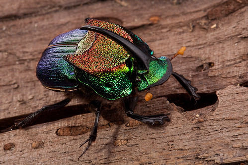Rainbow Scarab | by Seth Patterson