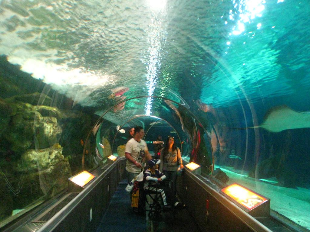 Sea Life Minnesota Aquarium Jobs