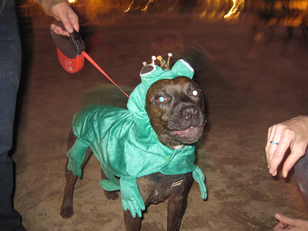 Image Result For Can Dogs Host
