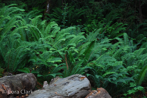 Bear Creek Campground - Harrison Lake, British Columbia   Flickr