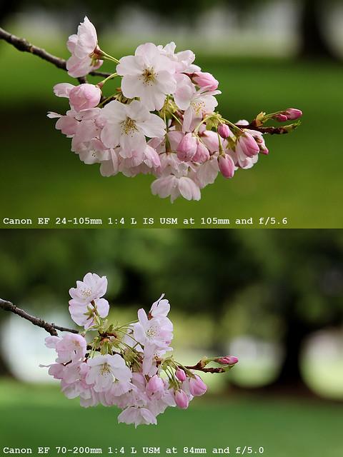 bokeh test canon ef 24 105mm f 4l is usm and ef 70 200mm f flickr. Black Bedroom Furniture Sets. Home Design Ideas