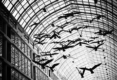 The Birds | by Philipp Klinger Photography