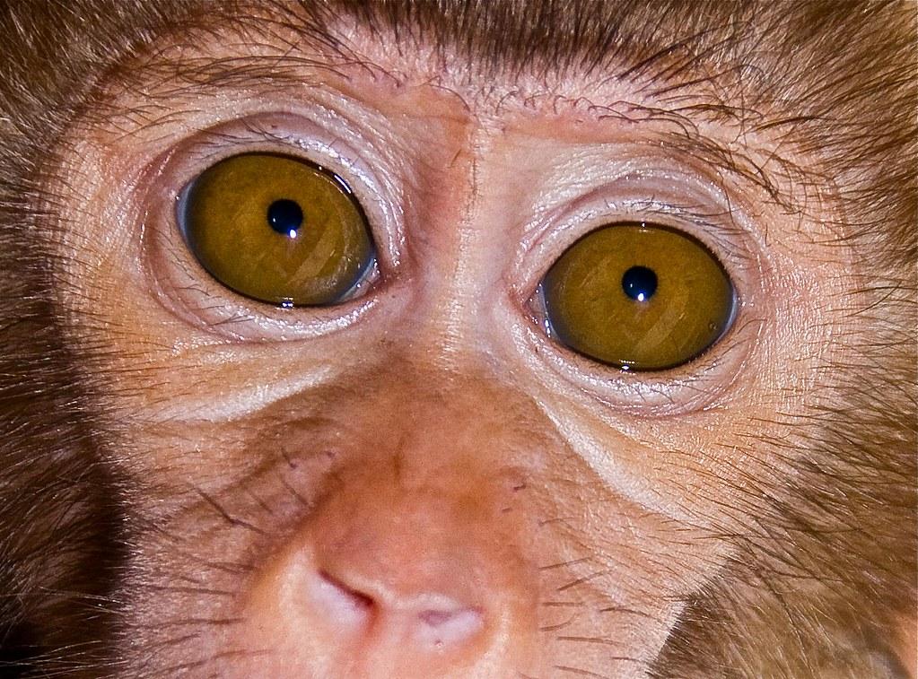 sad monkey sad eyes macaco com olhos triste baby