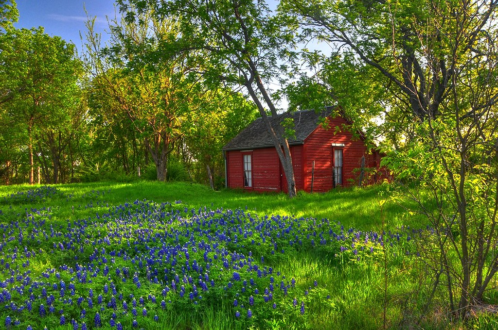 Cottage in the woods with bluebonnets we saw this in the for Texas cabins in the woods