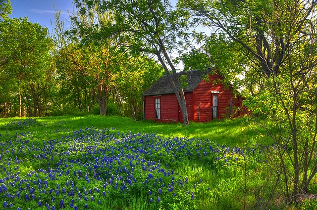 Cottage in the woods with bluebonnets flickr photo for Texas cabins in the woods
