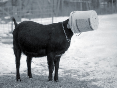 how to make goat water