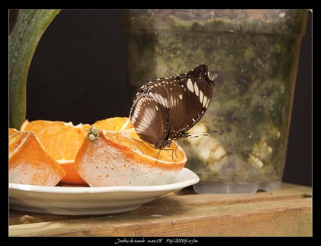 Jardins du monde papillon 2 flickr photo sharing for Jardin du bout du monde