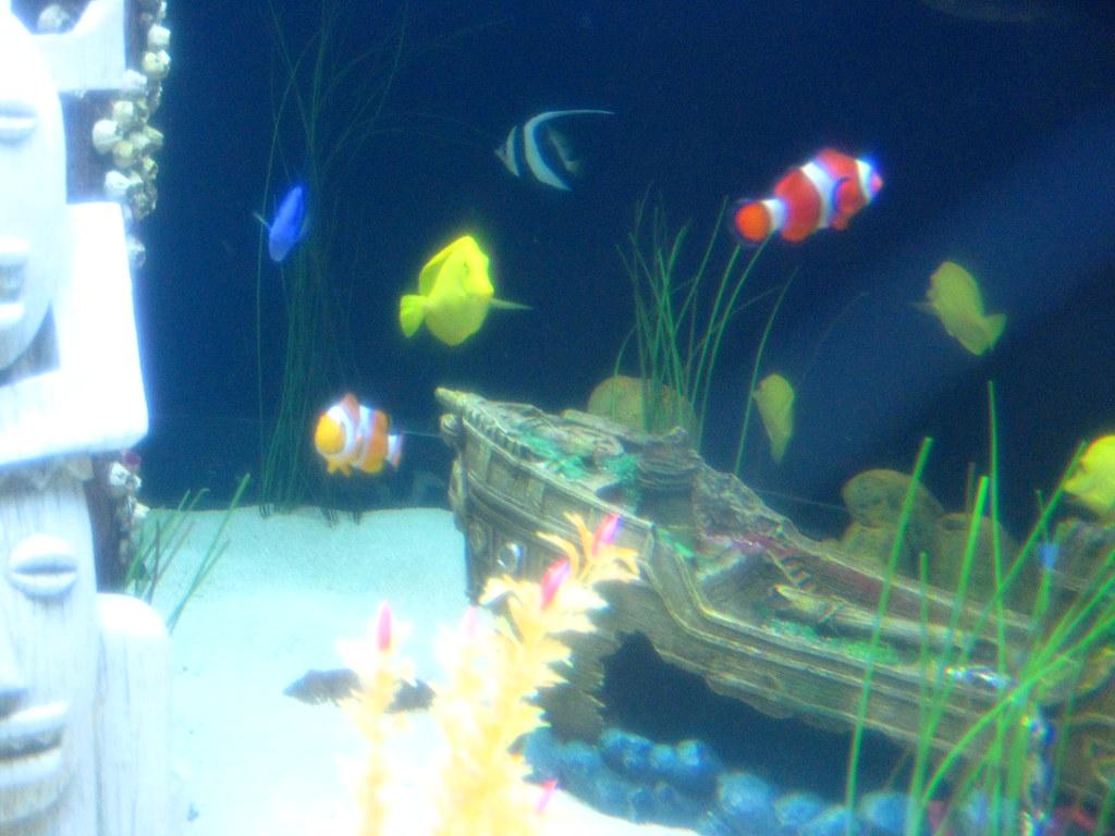 Image gallery nemo fish starfish for Finding nemo fish