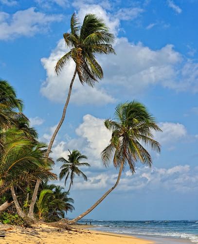 R publique dominicaine photo prise la plage macao pas - Prise republique dominicaine ...