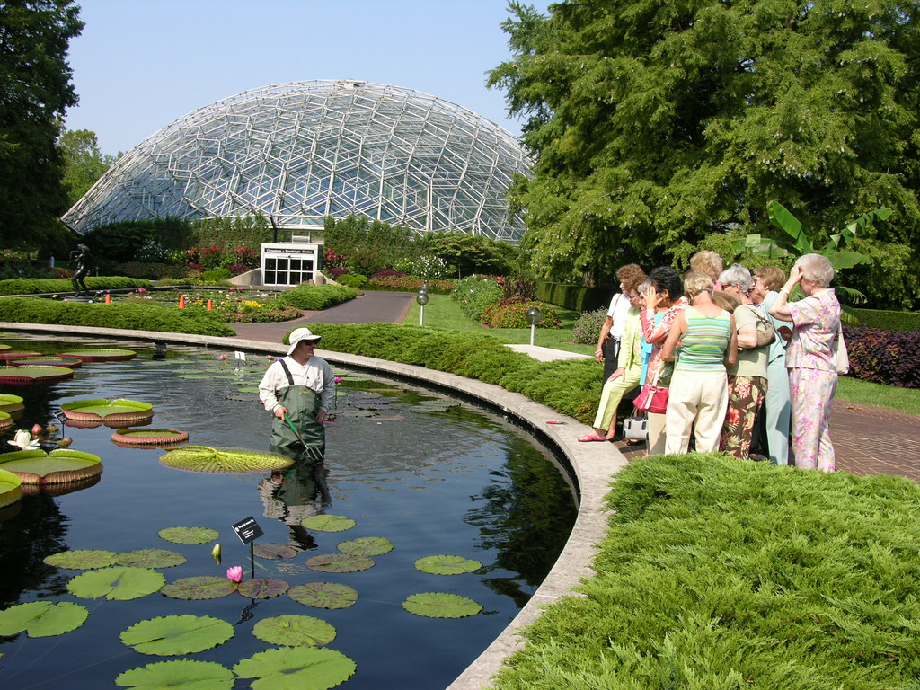 Water Lily Demonstration Missouri Botanical Garden Flickr