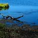 Myakka River State Park Driftwood Grasses Water