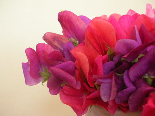 sweet peas from my aunty | by Emma Bee Loves Colourful Things!