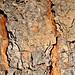 tree bark panorama