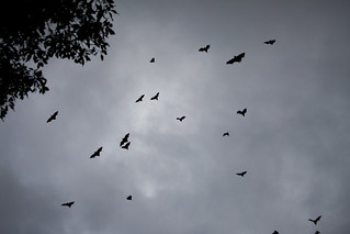 Bats over the Domain | by Jared Kelly