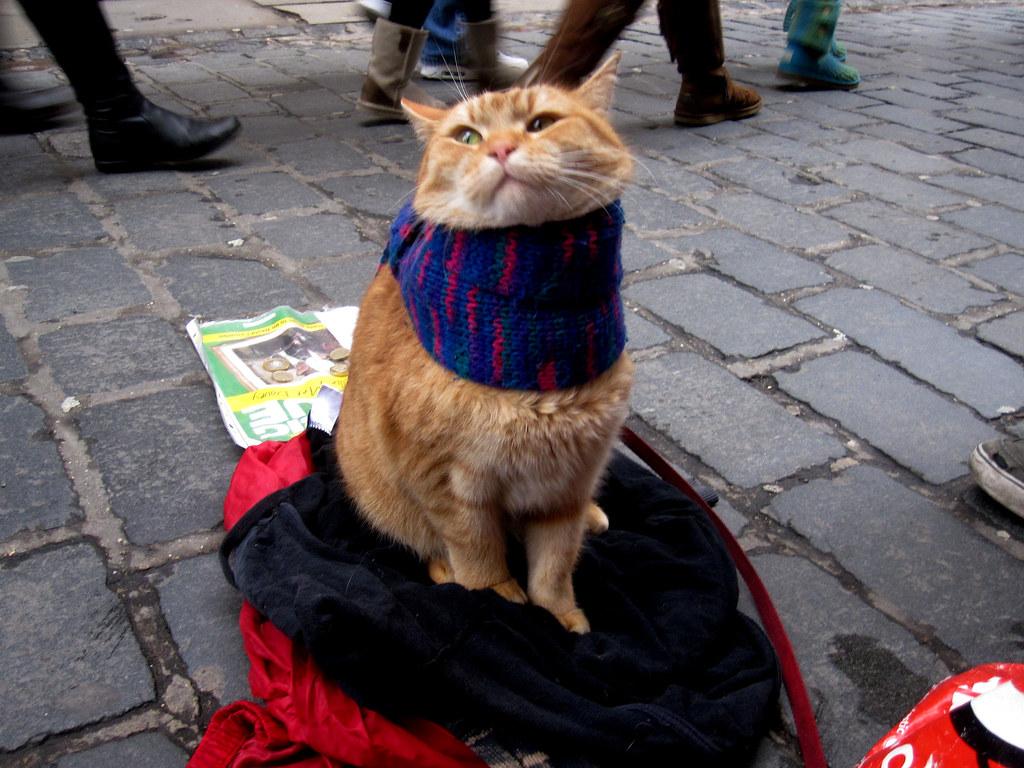 Street Cat Named Bob Dumfries