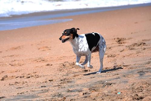 Huntington Beach Dog Barking Ordinance