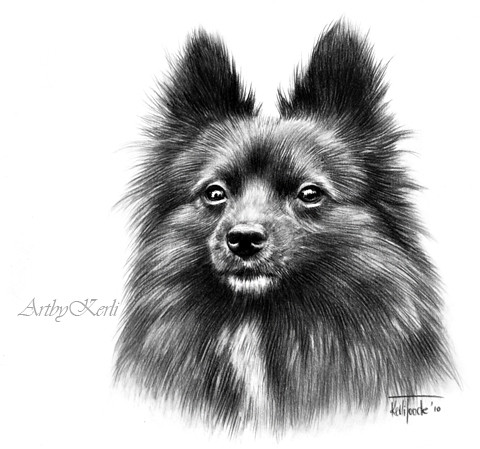 Lucky Magic Mery | Pencil drawing of a pomeranian on A5 ...