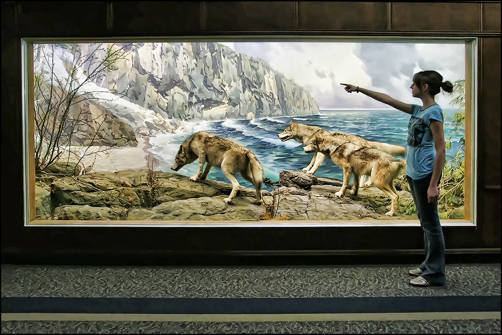 Bell Museum Minneapolis Leading The Diorama Wolf Pack