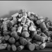 cork | sughero | quercus suber