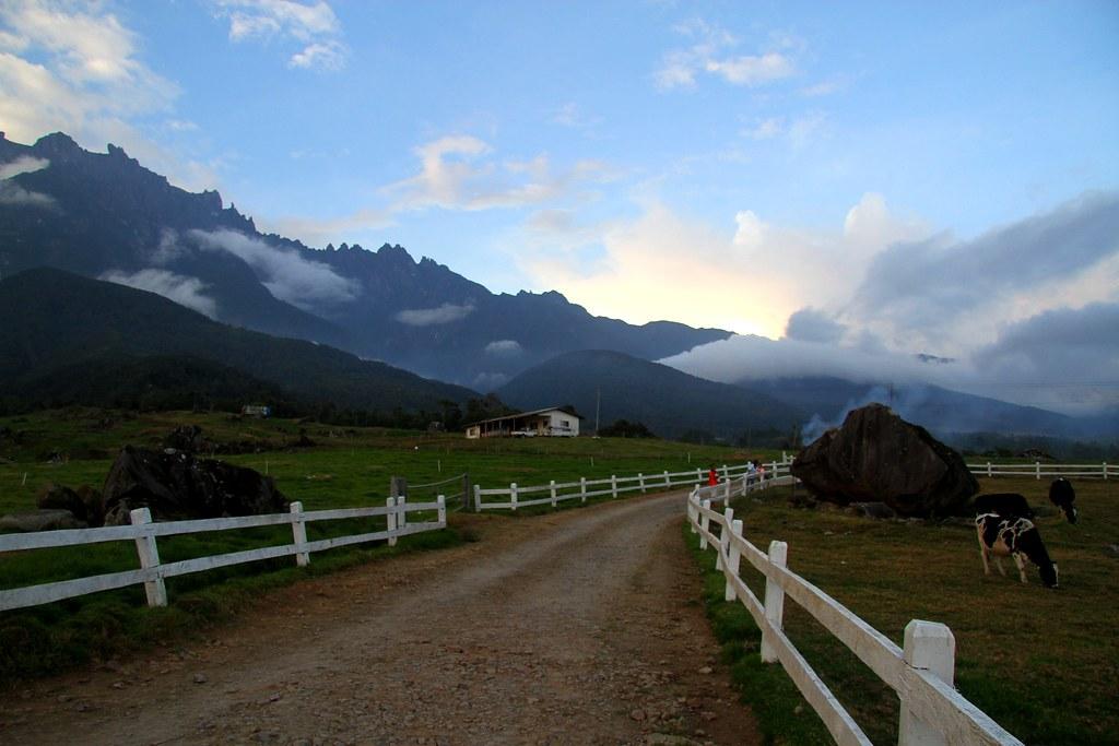 Desa Dairy Farm Kundasang Sabah