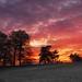Calke Abbey Sunset