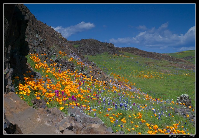 Table Mountain Wildflowers On Black Tony Immoos Flickr