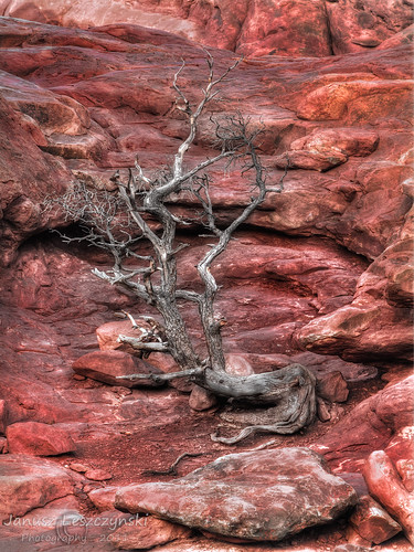 Red Rock Tree Altar | by janusz l