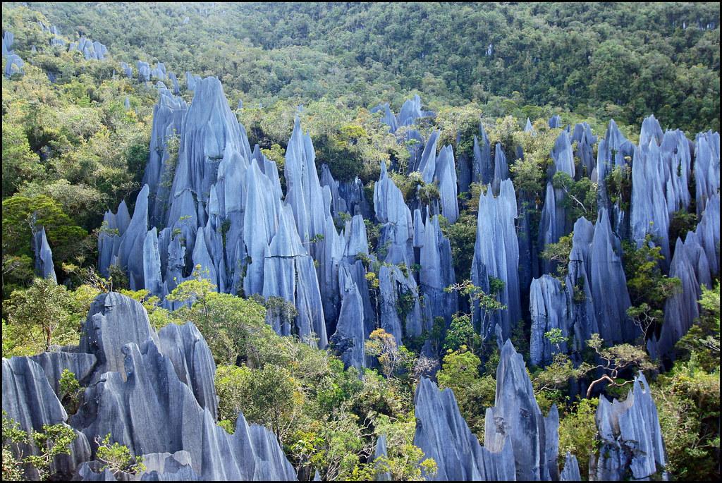 The Pinnacles, Mulu National Park, Borneo, Malaysia